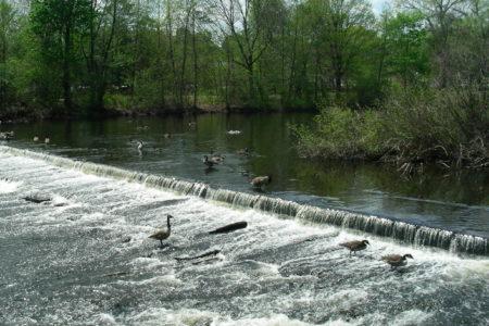 Charles River Dams